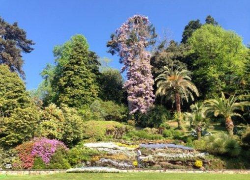 fioritura giardini villa carlotta